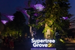 Supertree Grove