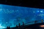 Ocean Dome