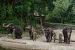 Elefantenshow