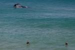 Wal und Surfer