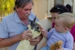 Baby-Känguru