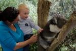 Koalas kuscheln