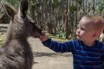 Dari mit Känguru