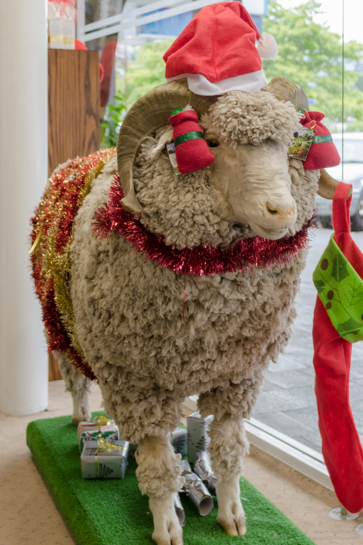 Frohe Weihnachten aus Neuseeland! • Reiseberichte und Fotos von Fern ...