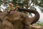 Dari auf dem Elefant