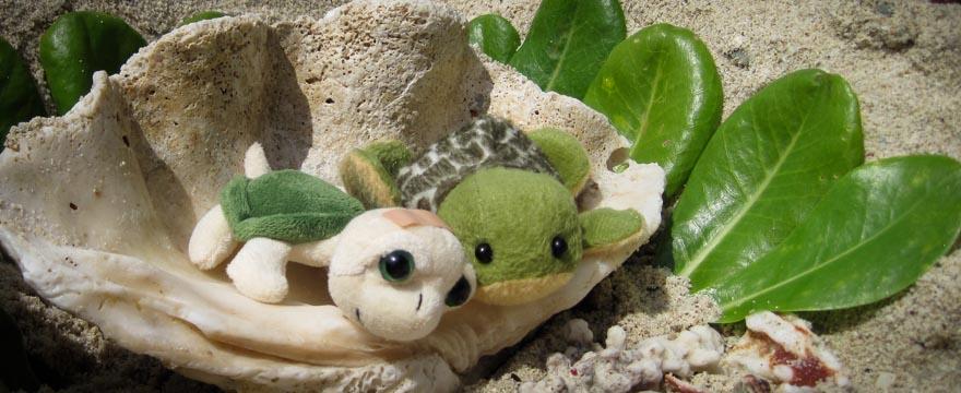 Schildkröte Bubu